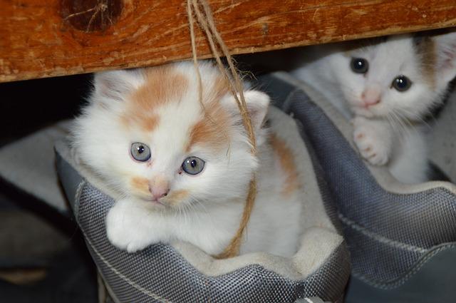 chat-sante-bien-etre