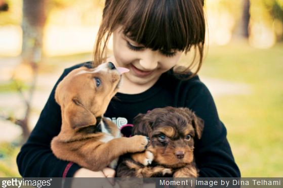 conseils-acquerir-animal-compagnie
