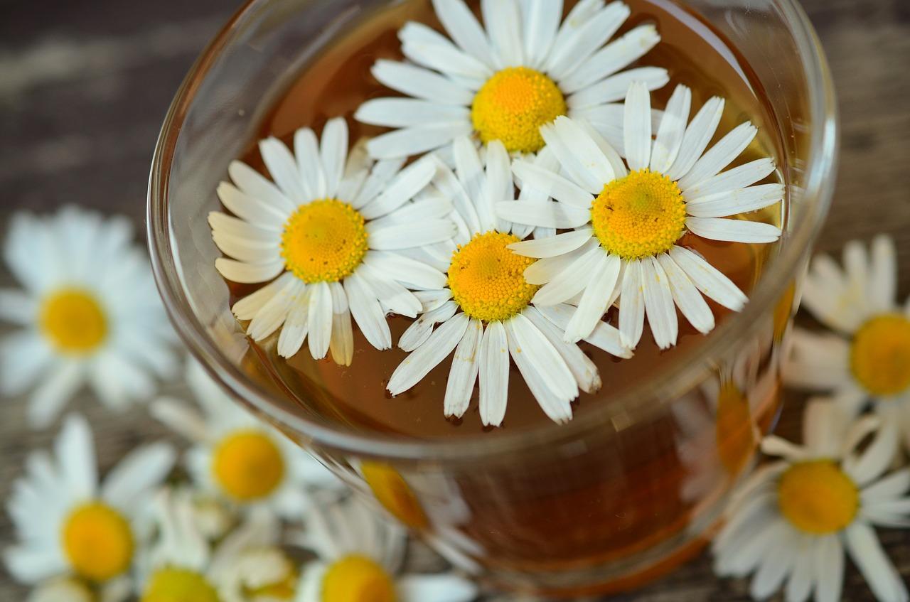 Phytotherapie santé par les plantes