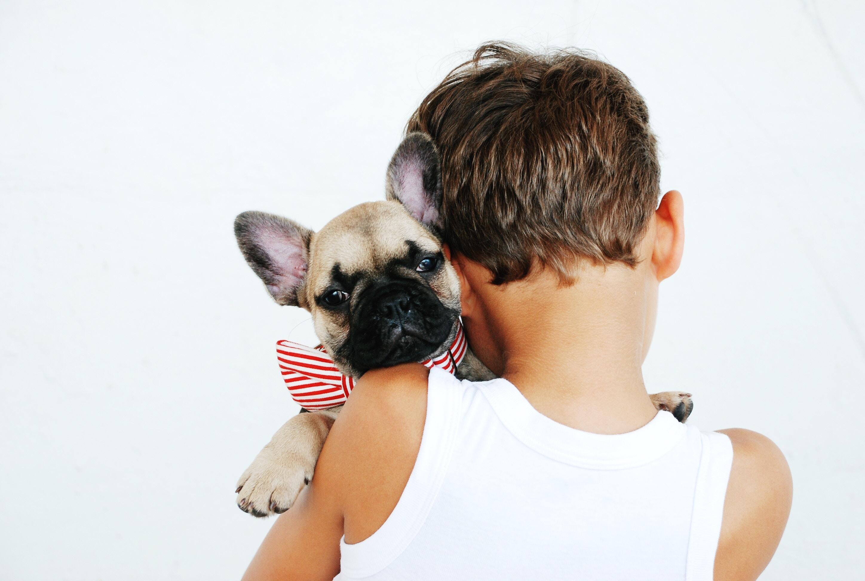 Un petit garçon avec un chiot carlin dans les bras