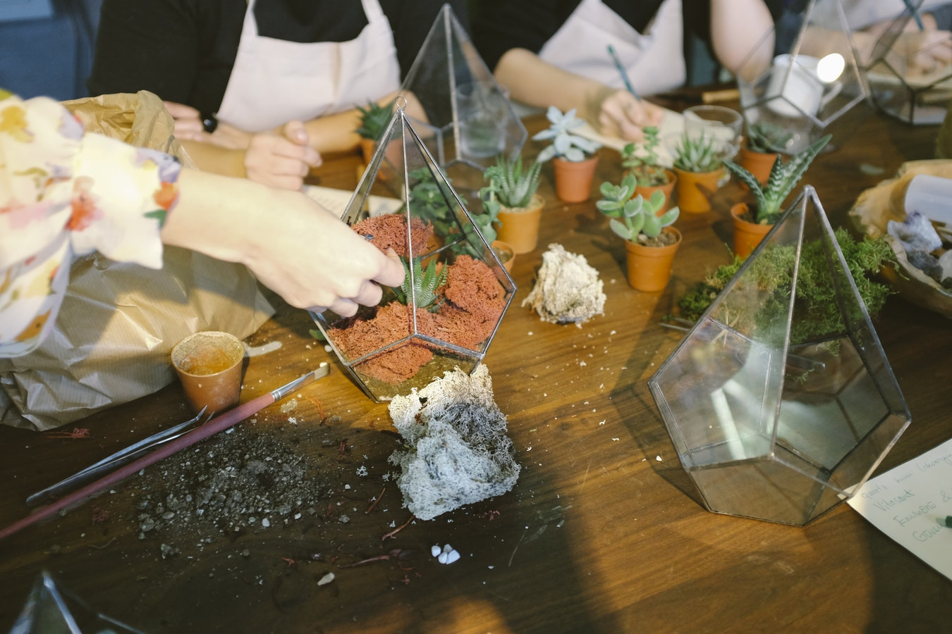 Atelier de confection DIY de terrarium