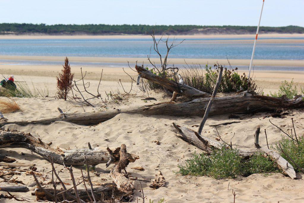 Une plage de l'île de ré