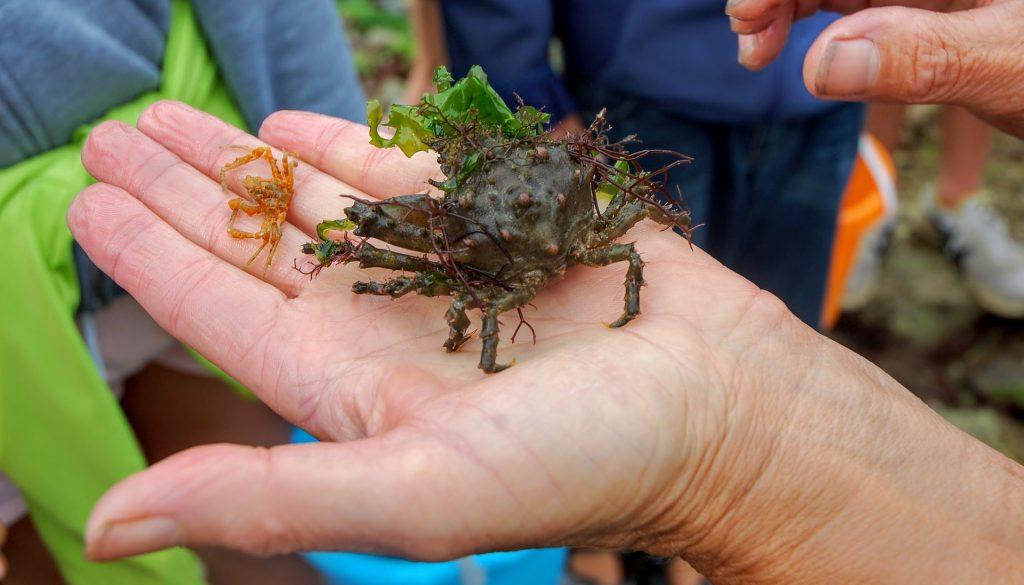 Un joli crabe observé à l'île d'oléron