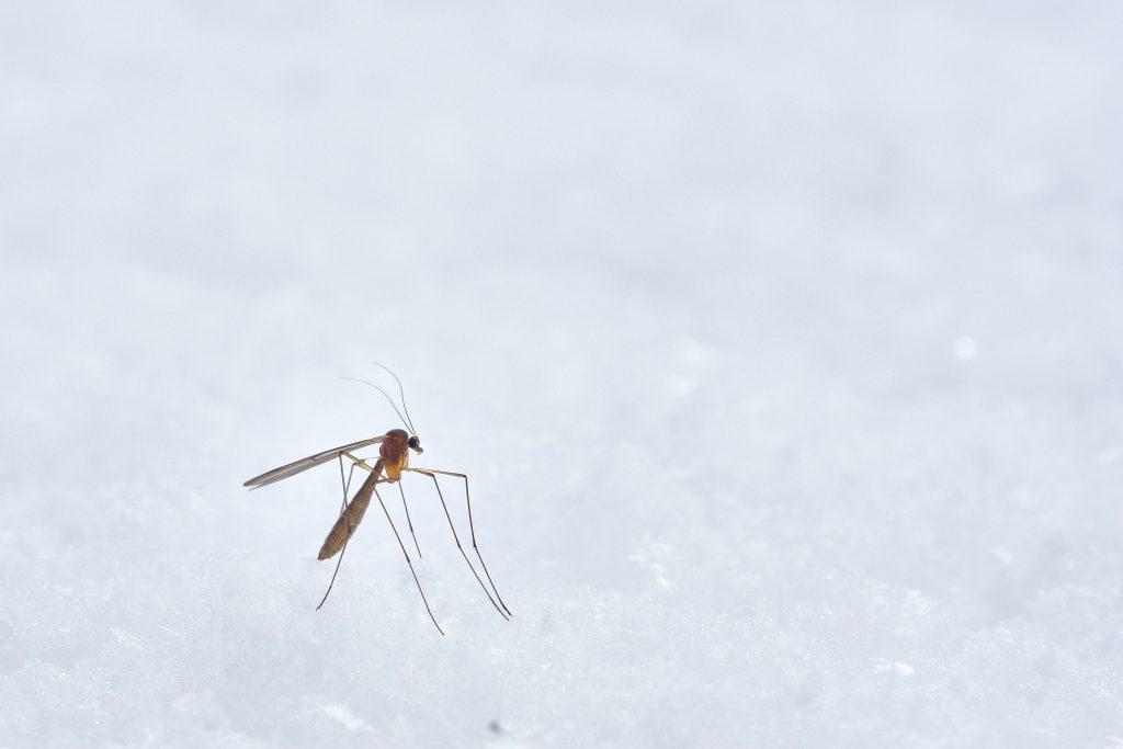 Combattre moustiques