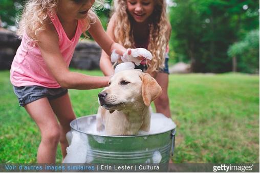Deux petites filles lavent un chien