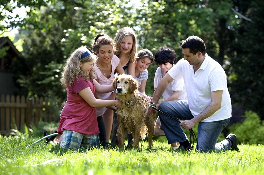 Together this family was in the process of washing their labrado