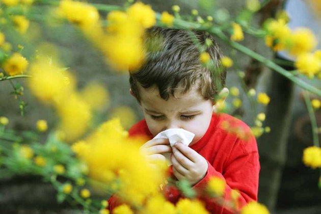allergie pollen cire abeilles