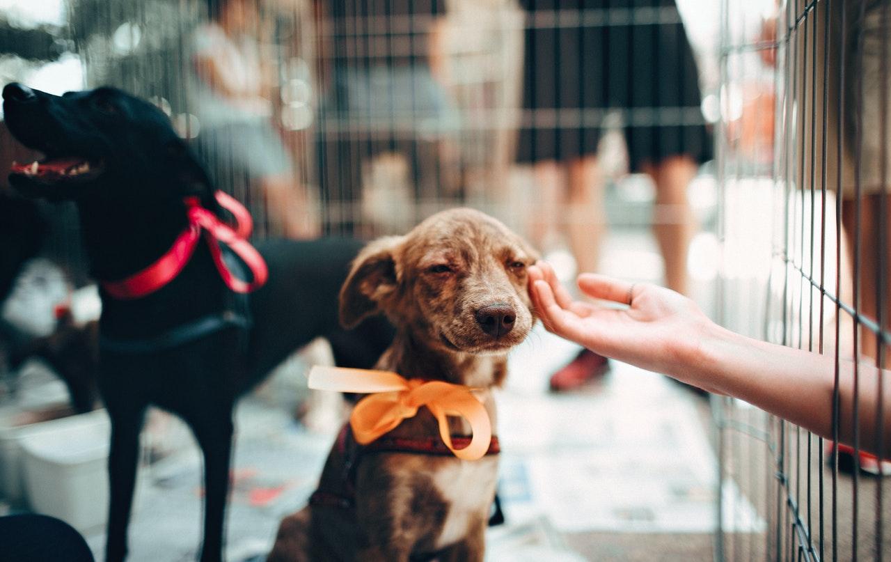 Chiot à l'adoption